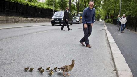 Statsministeren leter etter anden veranda når han går igjennom Slottsparken. (Foto: Adrian Nottestad)