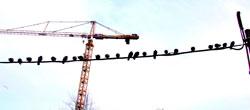 Om fuglene holder seg nær bakken blir det uvær. (Foto: (Illustrasjonsbilde)Colourbox)