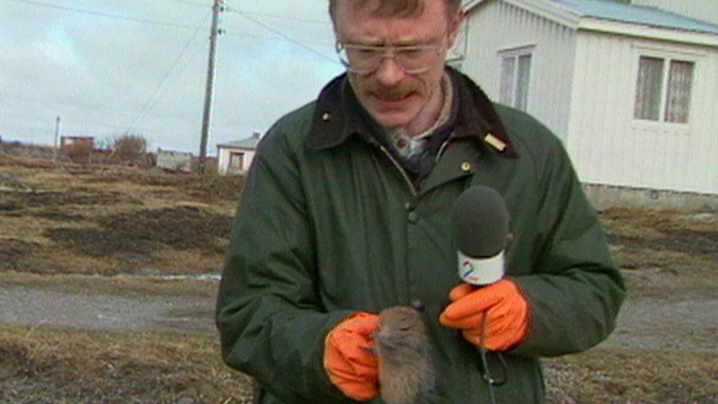 HARDT LIV: Her glefser rotta til i hånda til TV 2s Per Kristian Orset. (Foto: TV 2)