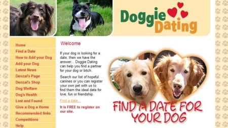 Trenger hunden din en kjæreste? På det sosiale nettstedet Doggie   Dating kan du finne en date til hunden din.