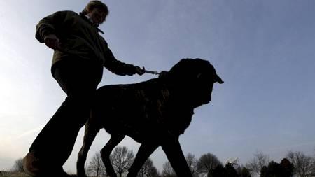 Hund og helse (Foto: Dan Kitwood/Getty Images)