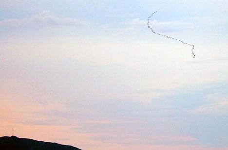 HELGEVÆRET: Er høsten kommet til Bergen? Fuglene er på vei sørover. (Foto: Ronny Tertnes)