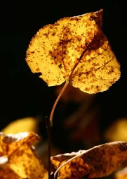 Høsten behøver ikke være en «deppetid». Ta en tur i skog og mark og nyt alle de vakre fargene.