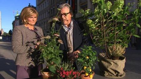 Finn Schjøll deler sine tips til klargjøring av hagen før vinteren setter inn.  (Foto: God morgen Norge)