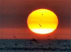 Solflekken er nå godt synlig på solskiven, litt over midten til venstre, mellom fuglene. (Foto: Damien Vens / spaceweather.com)