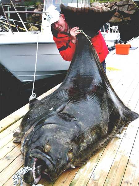 KJEMPE FRA DYPET: Fiskeren blir liten bak den 2,5 meter lange fisken. (Foto: bnps.co.uk)