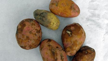 poteter (Foto: TV 2 hjelper deg)