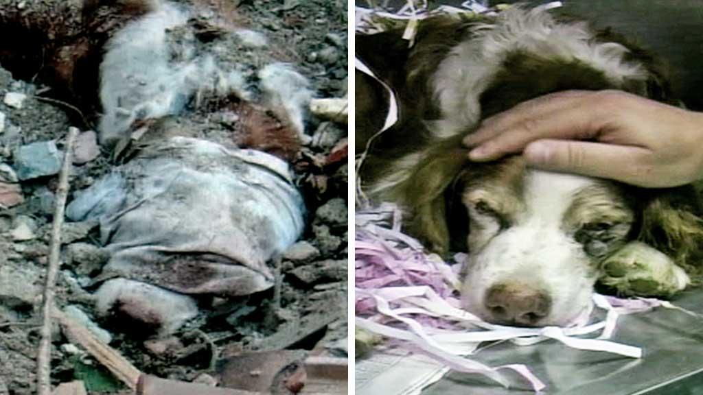 italia-hund-reddetmontasje (Foto: RAI)