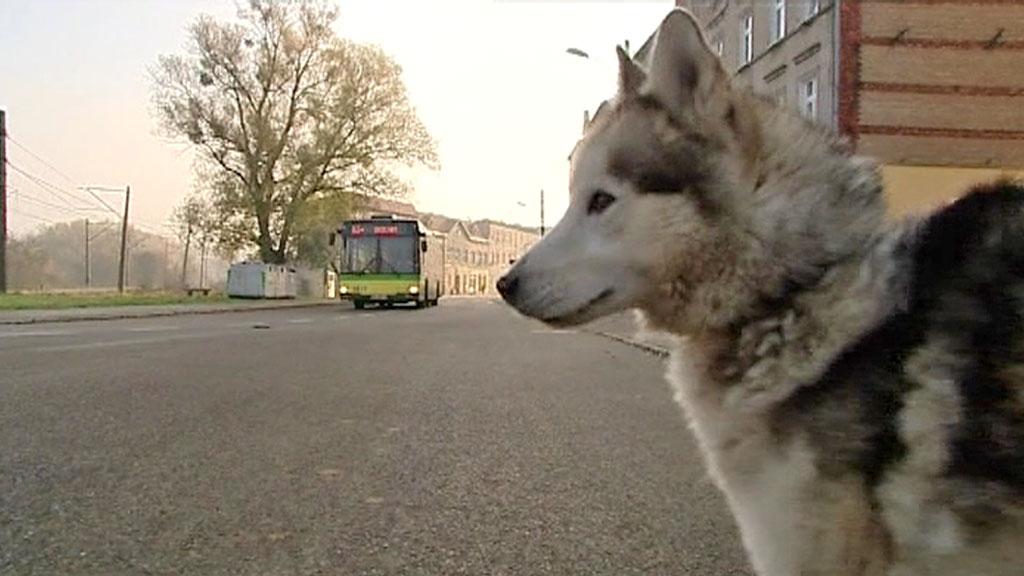 LENGTER: Ved denne veistrekningen så hunden Max sist sin eier. Det var for ett år siden da mannen reiste fra Polen til Norge. Hver dag siden har hunden stått å ventet på det samme stedet.  (Foto: TVN)