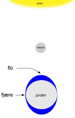 Når det er nymåne er månen mellom jorden og solen, og måne og sol trekker på havet i samme retning. Bølgen av vann flytter seg rundt jorden to ganger i døget.