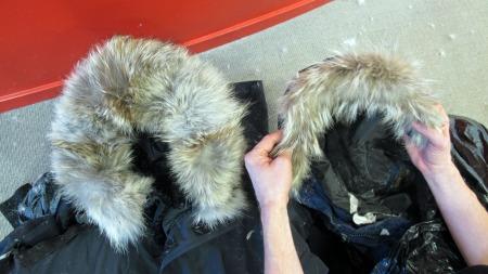 Canada Goose vest sale shop - Pelsen p? jakka di kan komme fra disse kinesiske m?rhundene