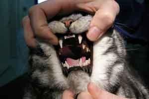 Churchill får sjekket tennene, som ser veldig bra ut. (Foto: Privat)