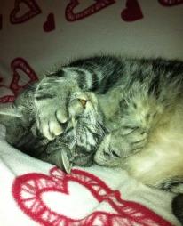 Katten Churchill slapper av og koser seg etter endt helsesjekk. Dyrlege Torill Moseng anbefaler å sjekke katten en gang i året. (Foto: Privat)
