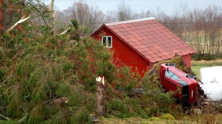 BIL OG TRE TATT AV «DAGMAR»: Da dette treet i Rotevatn i Volda veltet, dro den med bilen som sto parkert ved siden av.  (Foto: Anders Grimsrud Eriksen / TV 2)