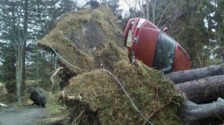 Bil blei med et rotvelt på til saman 3 stk store grantre, Vikebygda i Volda (Foto: Tipsebilde: Alice Rotevatn)