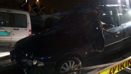 DØD ELG: Den mannlige sjåføren kom fra sammenstøtet med lettere kuttskader. Den stakkers elgen var ikke like heldig. (Foto: Trond Bonde)