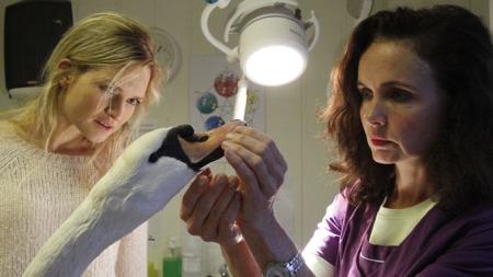 FIKK BEHANDLING: Veterinærene Christina Bjerkvig og Eva Kristin Lunde tok Hamnesjefen inn til 15 dager med pleie og omsorg. (Foto: Kjetil V. Bruarøy/Midtsiden.no)