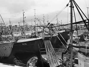 På 1970-tallet ble havnen i Båtsfjord mye brukt av snurpeflåten.   De som var til stede under Fiskernes Dag i 1971, fikk se Bjørn Kjos lande   midt blant publikum etter et fallskjermhopp fra et sivilt fly med flottører.