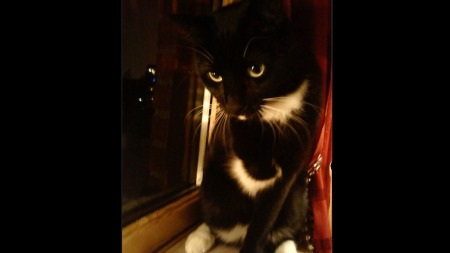 Katten Bajas trenger et nytt hjem