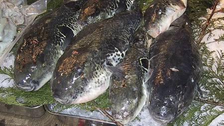 Fugu (Foto: Wikimedia Commons/)