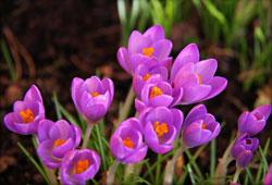 VÅR: Våren har kommet til Larvik. (Foto: Elisabeth Jacobsen)