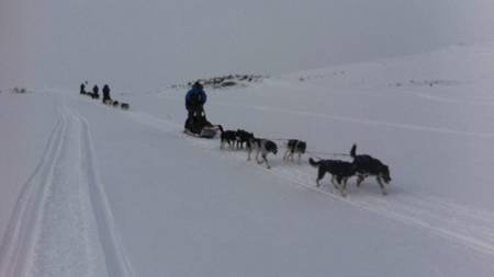 PÅ EKSPEDISJON: Dag Otto Lauritzen er TV 2s utsendte under Fjällräven Polars hundeløp i Nord-Norge. (Foto: Ivar Ekseth/)
