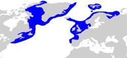 Håkjerringen finnes helt sør til Spania.  (Foto: Wikipedia Commons)