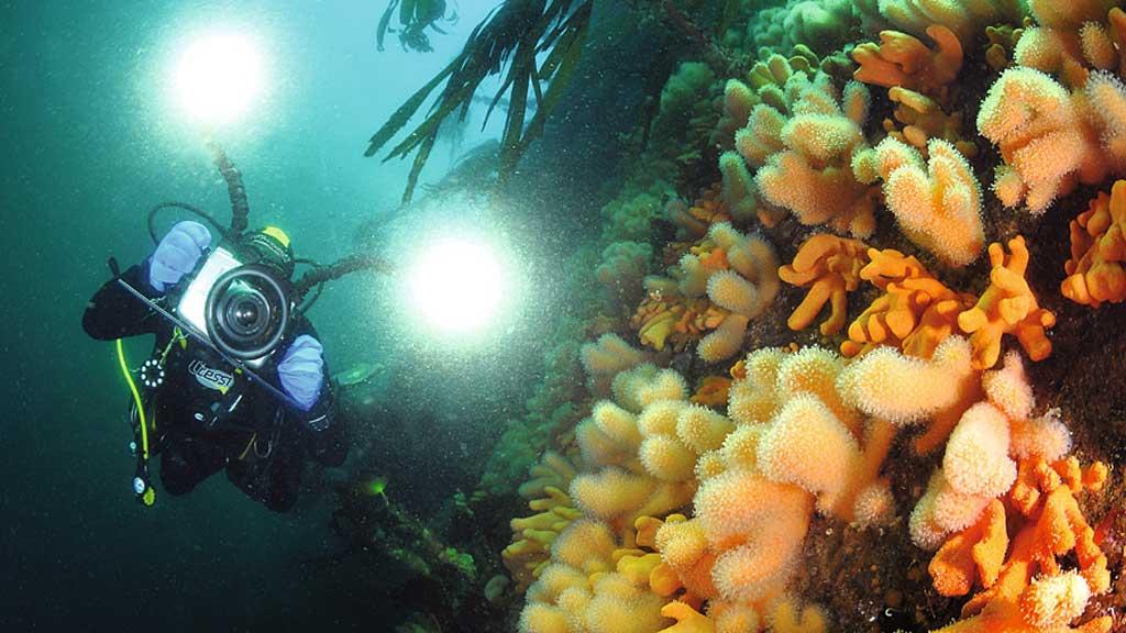 BAKKASTRAUMEN: Havbunnen ved Gulen blir viet et helt program i en ny tv-serie fra de beste dykkerstedene i verden. (Foto: Christian Skauge)