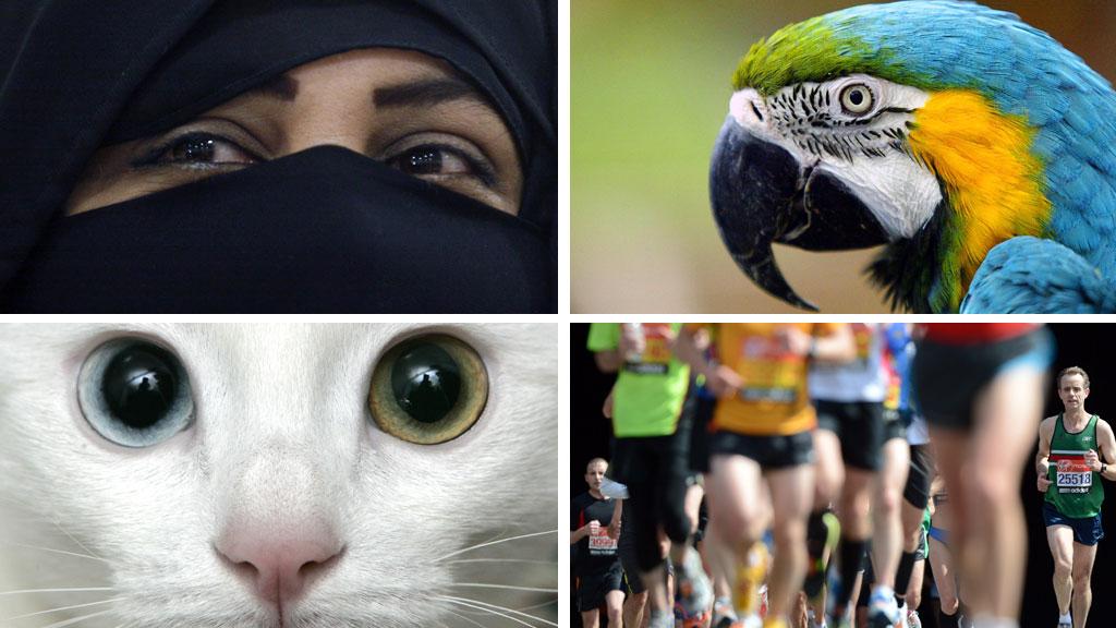 SKILSMISSEGRUNNER: Folk har de utroligste grunner til å skille lag. Sniktitting bak ansiktsløret, en litt for snakkesalig pappegøye, en alt for stor kjærlighet til katter, samt en i overkant stor interesse for løping - kan for noen være gode nok grunner. (Foto: Scanpix (montasje))