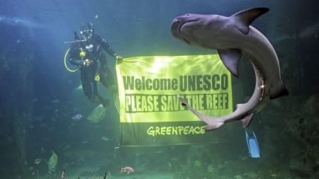 Dykkere fra Greenpeace demonstrerte i mars i år i et av de store tankene i akvaliet i Sydney, for å få UNESCO til å rette oppmerksomheten mot petroleumsvirksomheten i området. (Foto: GREG WOOD/Afp)