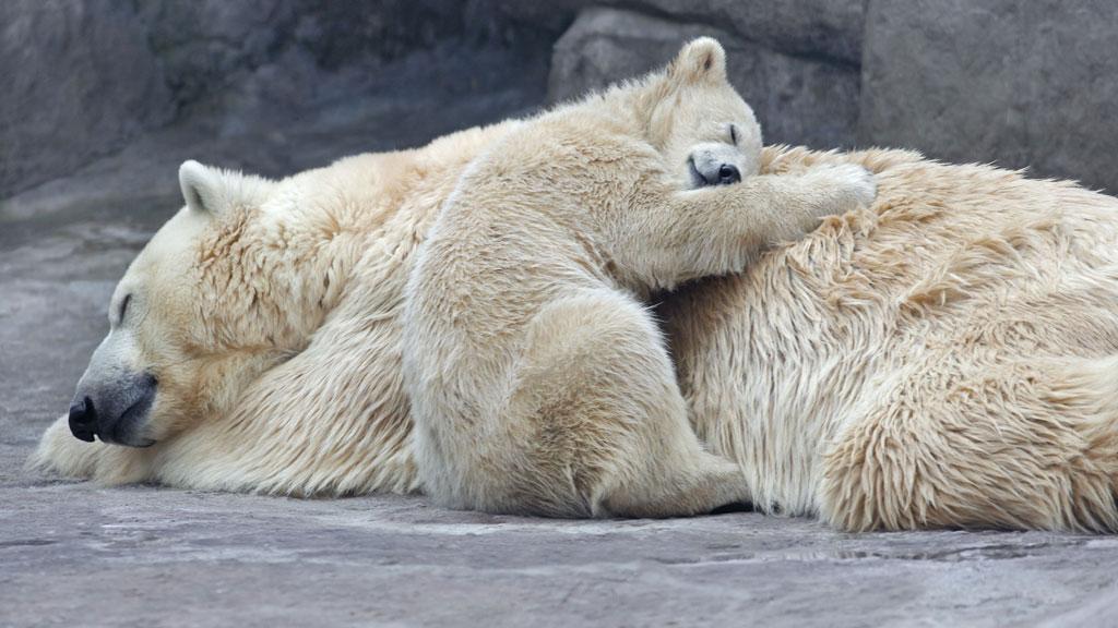 TRYGT: Det er nok godt å ligge inntil mamma. Bildet er tatt fra en dyrepark i Moskva. (Foto: Sergey Gladyshev)