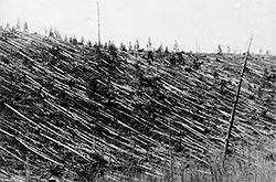 Slik så skogen ut da da Leonid Kulik kom til Tunguska i 1921. (Foto: Leonid Kulik)