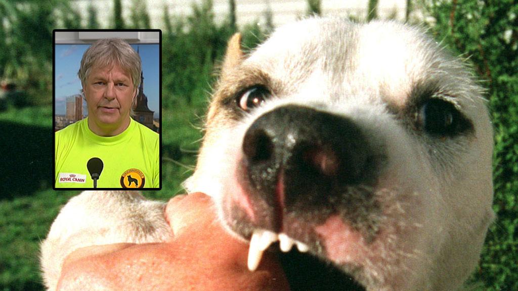 BITER: Hundeekspert Geir Marring mener vi bør innføre hundeopplæring i skolen slik som de har i Danmark. På den måten vil folk lære grunnleggende ting om hunder som kan føre til færre hundeangrep og bitt. - Dette ville vært en stor besparelse for samfunnet, sier han. (Illustrasjonsfoto). (Foto: Colourbox / montasje TV 2)