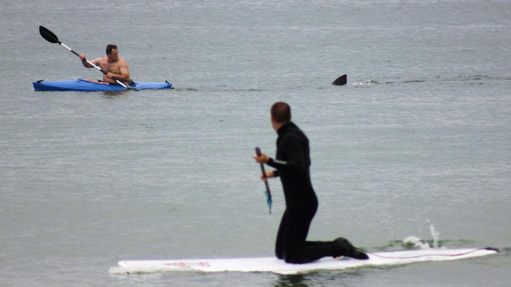 Hvithaien ble sett på den svært populære Nauset Beach på Cape Cod. (Foto: SCANPIX)