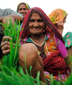 India ville tørket helt opp uten monsunregnet. Denne kvinnen planter årets ris. (Foto: Afp)