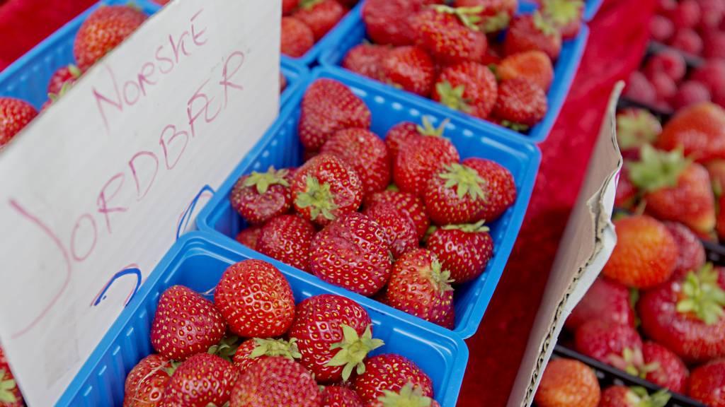 TRAPPER NED: Seks av ti norske jordbærbønder har gitt seg det siste tiåret. Nå står utenlandske jordbær for 75 prosent av jordbærene nordmenn spiser. (Foto: Stian Lysberg Solum/NTB scanpix)