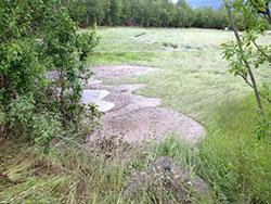 Denne engen var klar til slåtten, nå ligger gresset flatt. (Foto:   Egil Pettersen)