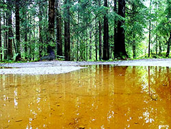 VANN: Regnet gjorde stiene i skogen om til små innsjøer i Akershus. (Foto: Berit S. Lier)