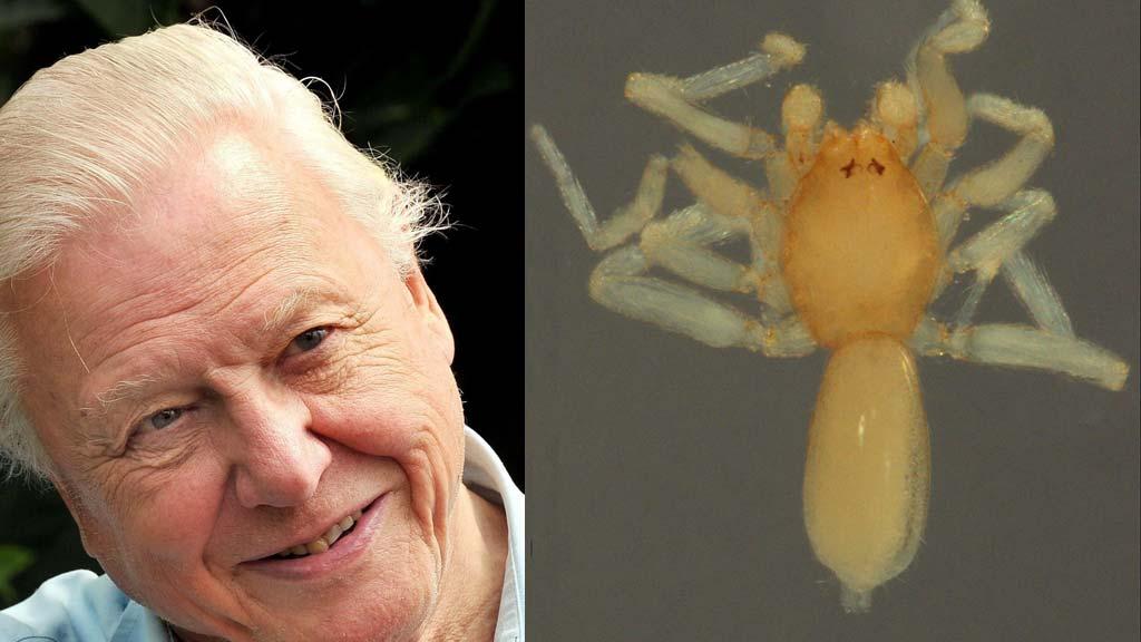NAVN: Sir David Attenborough har fått oppkalt denne lille krabaten etter seg. (Foto: NTB Scanpix)
