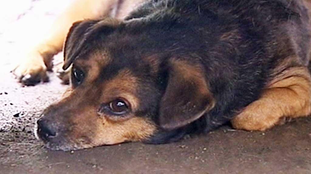 LOJAL: Denne hunden var hjemløs før den ble adoptert av mannen  som nå er død. (Foto: CCTV)