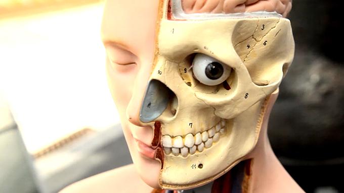 Indre organer, hodeskalle (Foto: TV 2)