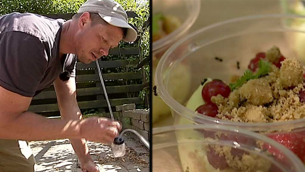 MAURENTUSIAST: Læreren og kokken Thomas Laurens som fant ut at denne sorten maur var en delikatesse. Nå leverer han blant annet til Noma.  (Foto: DKTV2 )