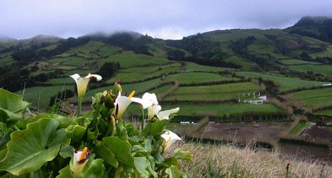 Azorene er frodige øyer, perfekt for fotturer og et populært reisemål. (Foto: Ronald Toppe)