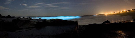 Morild får bølgene til å lyse opp utenfor Philadelphia i USA. (Foto: Wikimedia Commons)