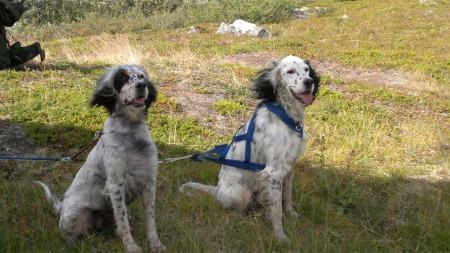 TILBAKE: Mira og Nadja har vært borte siden lørdag ettermiddag. Tirsdag ettermiddag ble de funnet takket være en synsk dame. (Foto: Tore Schjelderup)
