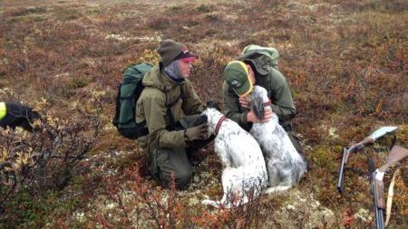 LYKKELIG GJENSYN: Kjell var svært glad da de endelig fant igjen hundene.  (Foto: Tore Schjelderup)