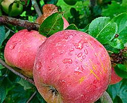 Regn på Langhus 10. september. (Foto: erit S. Lier)