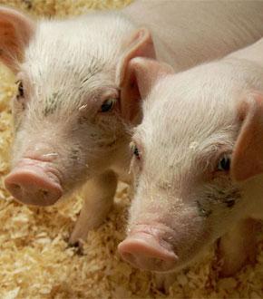 griser-farmen