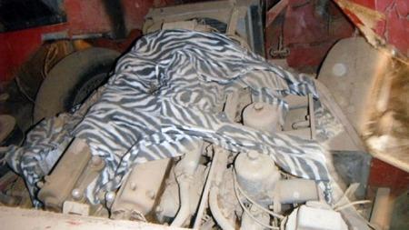 Under zebra-teppet hviler 265 hk, og det har de gjort lenge.   Nå er det på høy tid å vekke de opp! (Foto: eBay)