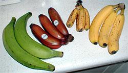 De grønne er kokebananer, så rød banan. eplebanan og cavendish-banan. Den siste er den sorten vi er vant til. (Foto: Wikimedia Commons)